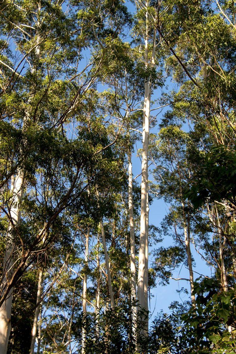Fiber Thatch_Eucalyptus Grandis_Roof Structures03